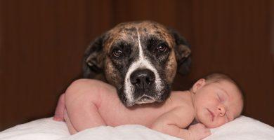 ninos y mascotas ventajas crecer juntos